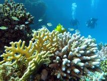 热带海运底层的珊瑚礁和潜水员  库存图片