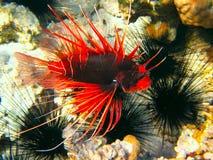 热带海水下的生活  免版税图库摄影