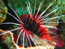 热带海水下的生活  库存照片