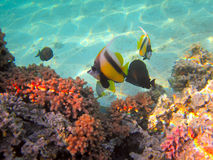 热带海水下的生活  免版税库存照片
