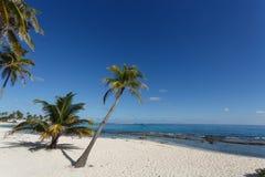 热带海滩和可可椰子树 免版税库存照片