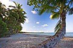 热带海滩和棕榈树 库存照片