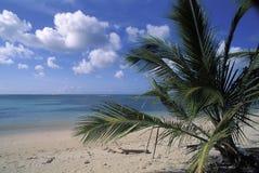 热带海滩在多巴哥 库存图片