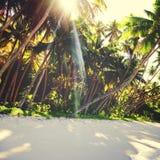 热带海滩旅行假日假期休闲自然概念 库存图片
