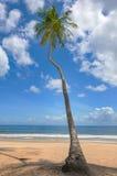 热带海滩棕榈树特立尼达和多巴哥Maracas海湾蓝天和海 免版税图库摄影