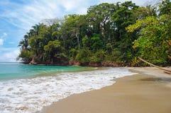 热带海滩植被 库存图片