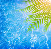 热带海滩的游泳池边 库存照片