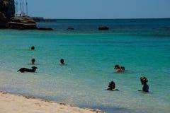 热带海滩,沐浴者加上游泳狗 库存图片