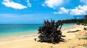 热带海滩Andamans 免版税库存照片