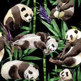 热带混合竹树和熊猫样式在水彩样式 库存图片