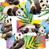 热带混合竹树和熊猫样式在水彩样式 免版税库存照片