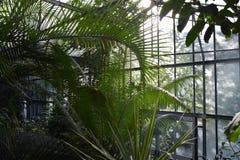 热带温室,罗马Museo Orto Botanico二罗马植物园  库存照片