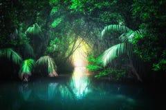 热带湖在美洲红树雨林斯里兰卡里 免版税库存图片