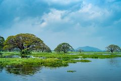 热带湖风景看法有树的在水中 免版税库存照片