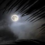 热带满月的晚上 库存图片