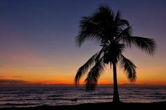 热带澳洲的日落 免版税库存图片