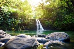 热带瀑布更低的Waikamoi秋天和一个小透明的池塘,在一片密集的热带雨林里面,路韩的 库存图片