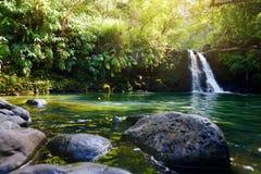 热带瀑布更低的Waikamoi秋天和一个小透明的池塘,在一片密集的热带雨林里面,路韩的 免版税库存照片