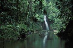 热带瀑布,特立尼达 免版税库存图片