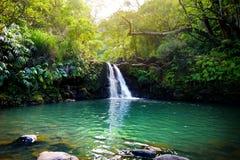 热带瀑布更低的Waikamoi秋天和一个小透明的池塘,在一片密集的热带雨林里面,路韩的 库存照片
