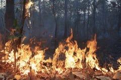 热带燃烧的被毁坏的森林 免版税库存图片