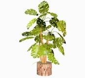 热带爱树木的人厂 向量例证