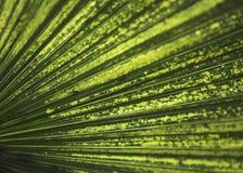 热带特写镜头的叶子 免版税库存图片