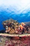 热带珊瑚的鱼 免版税库存照片