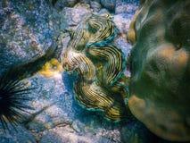 热带珊瑚礁在泰国 免版税库存照片