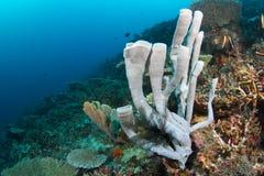 热带珊瑚礁的海绵 免版税库存图片