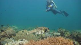 热带珊瑚鱼的礁石 菲律宾,民都洛 股票视频