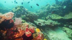 热带珊瑚鱼的礁石 菲律宾,民都洛