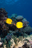 热带珊瑚鱼的礁石 免版税库存图片