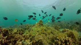 热带珊瑚鱼的礁石 股票视频