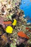 热带珊瑚鱼的礁石 图库摄影