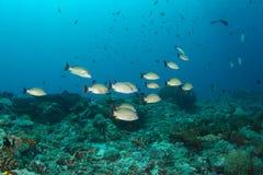 热带珊瑚鱼的礁石 库存图片
