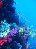 热带珊瑚鱼的礁石 免版税库存照片