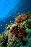 热带珊瑚鱼的礁石 库存照片