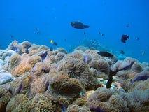 热带生活的海运 库存图片
