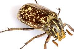热带甲虫的雨林 库存图片