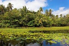 热带百合的池塘 免版税库存照片