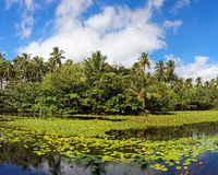 热带百合的池塘 图库摄影