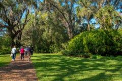 热带的公园 漫步 图库摄影