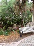 热带的公园 库存照片