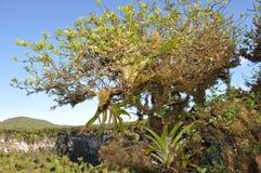 热带的加拉帕戈斯 免版税库存照片