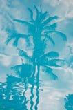 热带的反映 库存照片