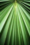 热带的叶子 库存图片