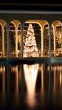 热带的圣诞节 库存图片