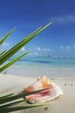 热带的场面 库存图片