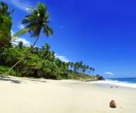 热带的天堂 库存图片